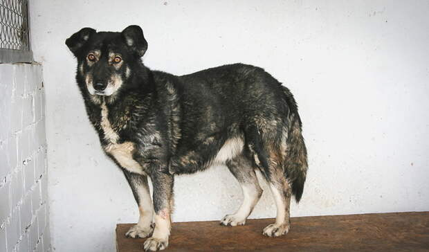 Бродячих псов вНижнем Тагиле снова будет отлавливать красноуральская фирма