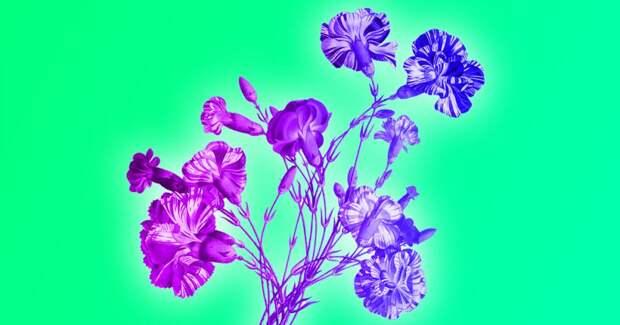 Тест: Слабо правильно назвать эти 7 полевых цветов?