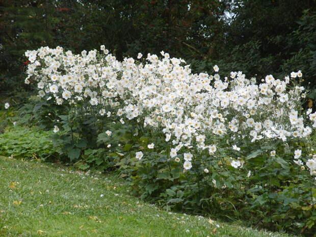 10 растений, цветущих в октябре