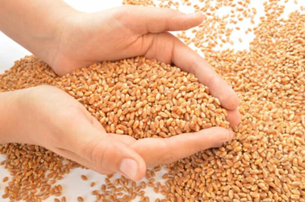 Суммарный оборот торгов фьючерсами на пшеницу на Мосбирже составил около 11 млн рублей