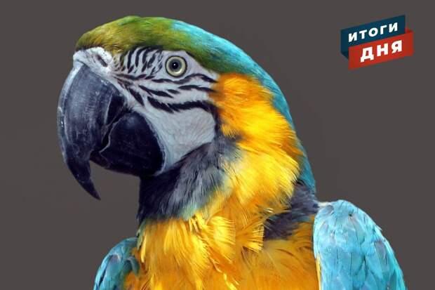 Итоги дня: подготовка к отопительному сезону, приговор за надругательство над детьми и тропический попугай в лесах Удмуртии