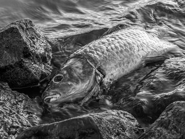 В нерестовой реке на Камчатке нашли нефтяное пятно
