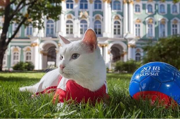 Кот Ахилл из Эрмитажа Ахилл, кот, кошка, ленинград, лось, музей, туризм, фото