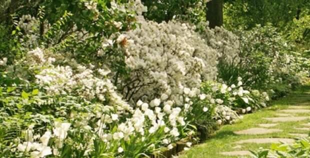 Сад белого цвета