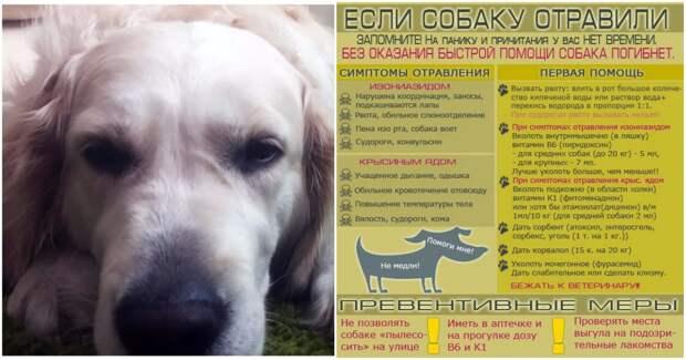 Собака отравилась: как реагировать, чтобы спасти жизнь и здоровье животного? Быстрая помощь в инфографике