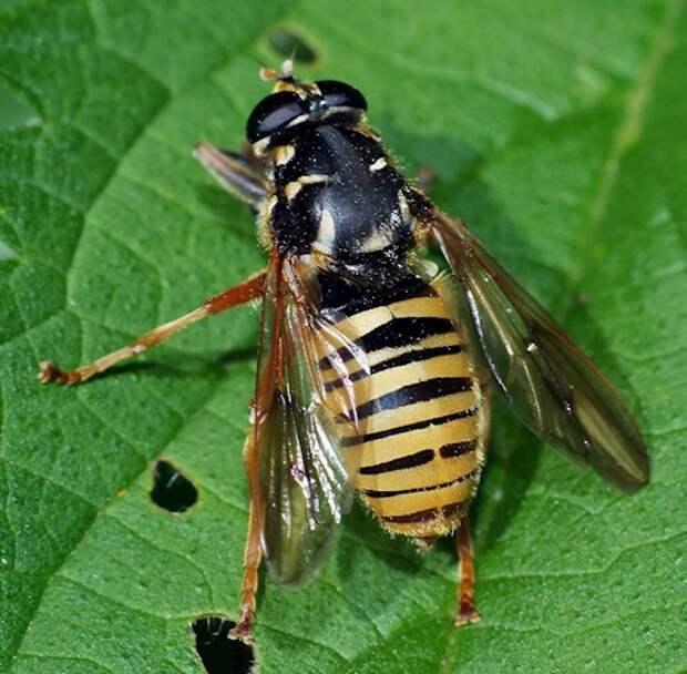 Санитары сада или как не перепутать полезных насекомых с вредителями!