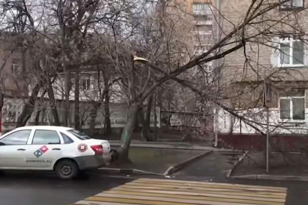 Ветер повалил почти 100 деревьев в Подмосковье