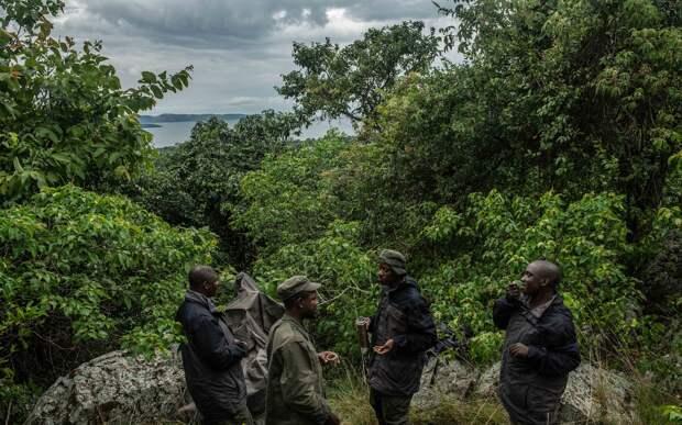 Парк Юрского периода реален: ученых заставили признать тайный эксперимент на острове