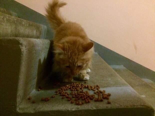 История одной рыжей кошки