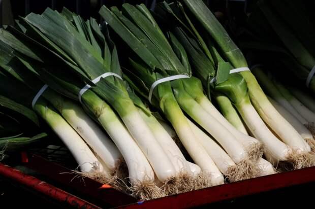 Когда сажать лук-порей - простые советы по выращиванию лука-порея