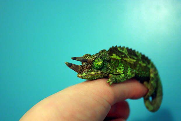 cute-baby-chameleons-582c69a97f68e__700