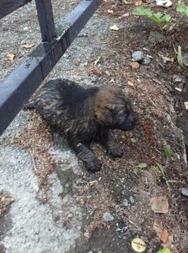 12-летний Саша спас маленького щенка из канавы, которая была затоплена