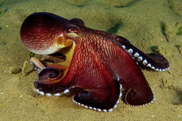 Самые яркие обитатели океана животные, красота, океан