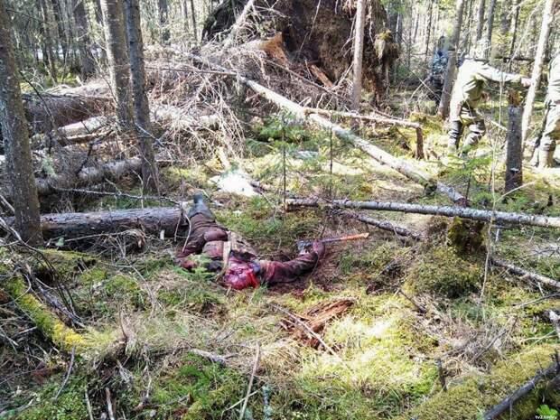 Медведь убил мужчину в Тегульдетском районе. 18 +