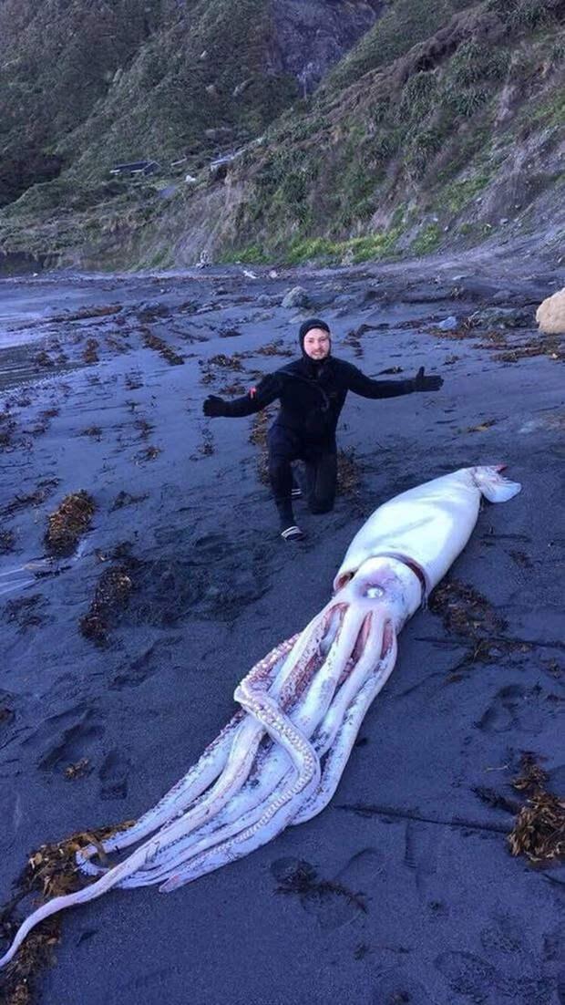 Мужчина вышел на берег и нашел гигантского 4-метрового кальмара