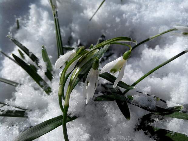 Гидрометцентр: в регионах России ожидается аномально холодная погода