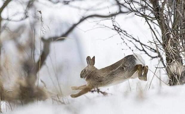 Лесные звери: фото, описание