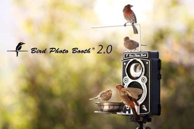 Фотограф птичек.