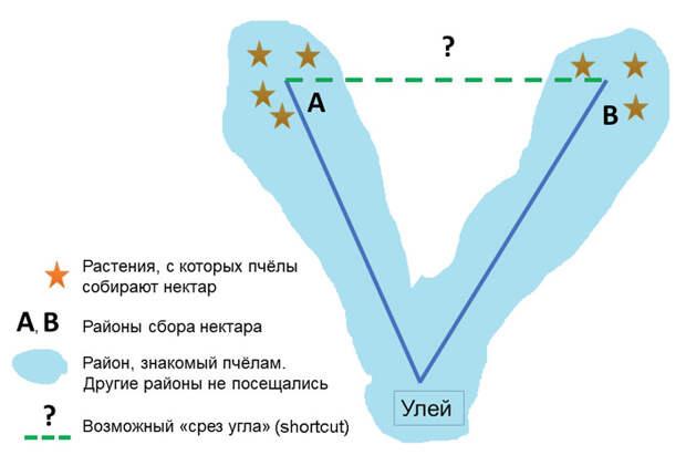 Рис. 2. Иллюстрация «срезания угла» (shortcut)