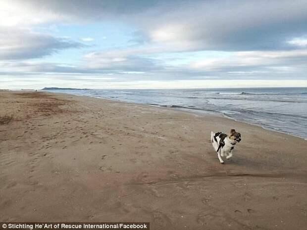 Удивительное преображение облитого клеем щенка до и после, животные, собака, спасение, трансформация