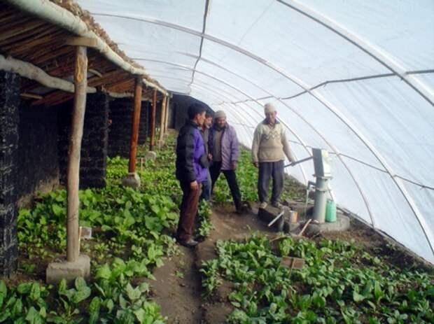 Органическое земледелие, пермакультура: внутри теплицы