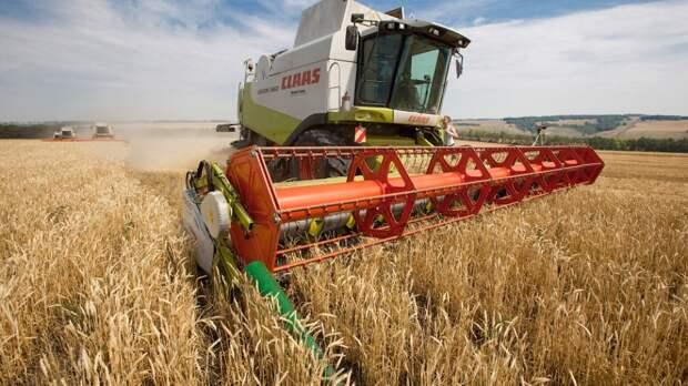 Минсельхоз США прогнозирует в России один из лучших урожаев пшеницы в истории