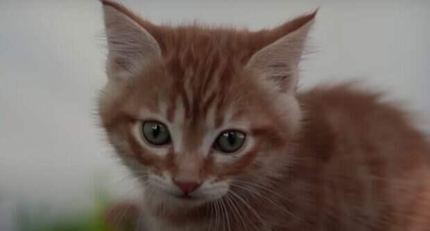 Навлечете беду: стало известно, почему нельзя называть кошек человеческими именами