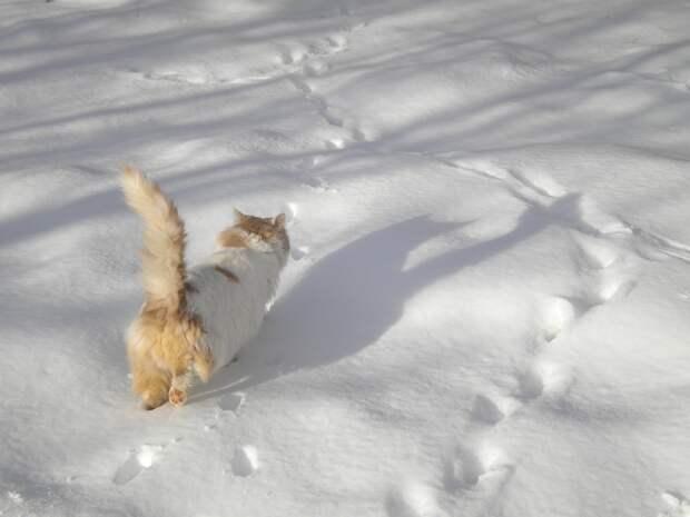 Потепление и снегопад придут в Удмуртию в воскресенье, 1 декабря
