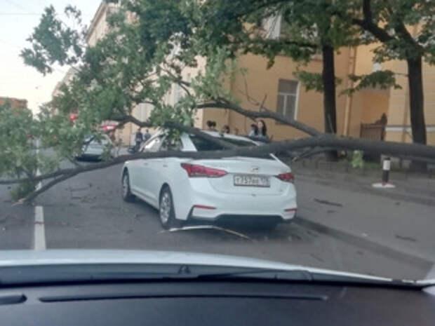 ЧП. В центре Санкт-Петербурга дерево рухнуло на машину
