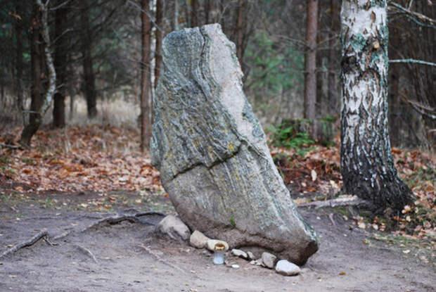 Загадки Покайнского леса