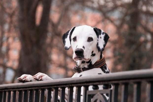 Собака/ Фото pixabay.com