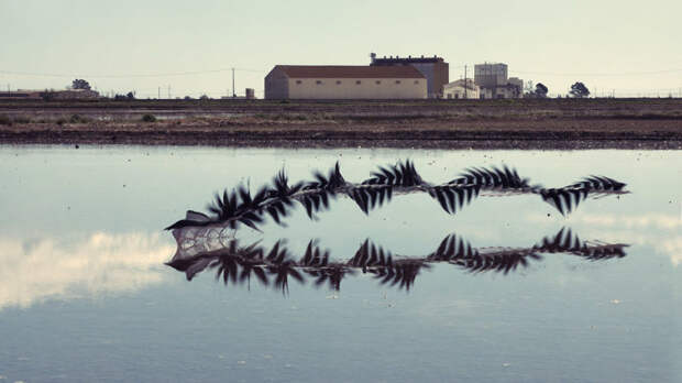 10 поразительных фото, на которых запечатлены «узоры» полетов птиц