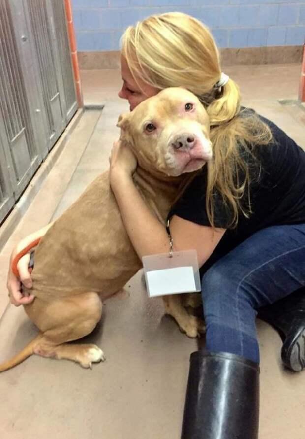 Новая жизнь смертельно больного пса животные, пес;болен