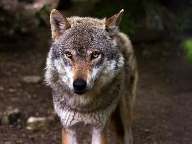 «Вопиющий случай варварской дикости»: в петиции на сайте change.org требуют привлечь депутата Хахалова к ответственности за жестокое обращение с животными