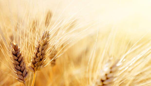 В России начала действовать повышенная пошлина на вывоз пшеницы