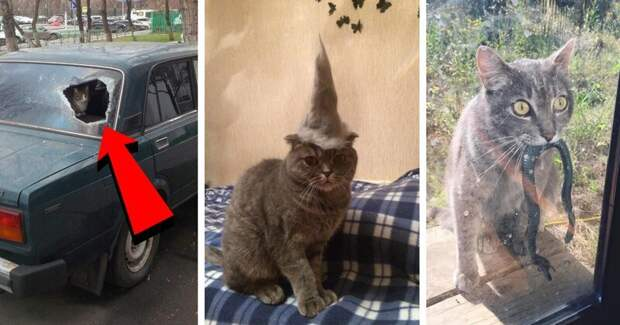 20 причин, по которым котов лучше не злить животные, кот, кошка, месть, прикол, смех, хулиган, юмор