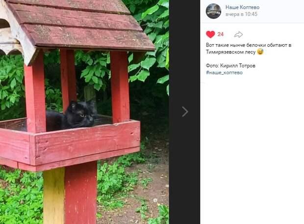 Фото дня: кот под прикрытием в Тимирязевском