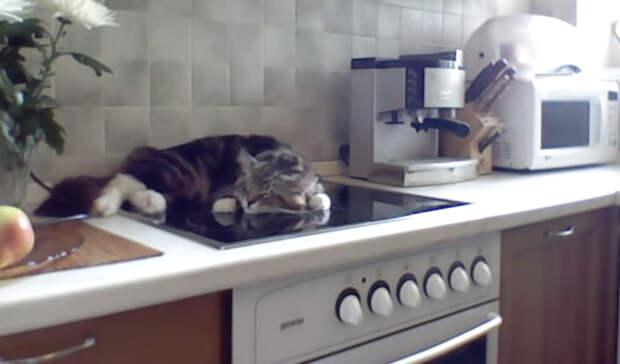 Кот Никифор мало того, что разлегся на кухонной плите, так еще и огрызается
