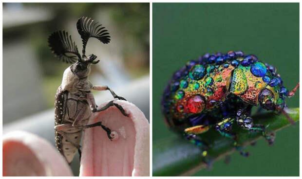Бывают крошечными жуки, интересное, красивое, насекомые