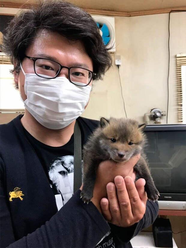 Парень нашел маленького щенка, но друзья сказали, что это вовсе не щенок!