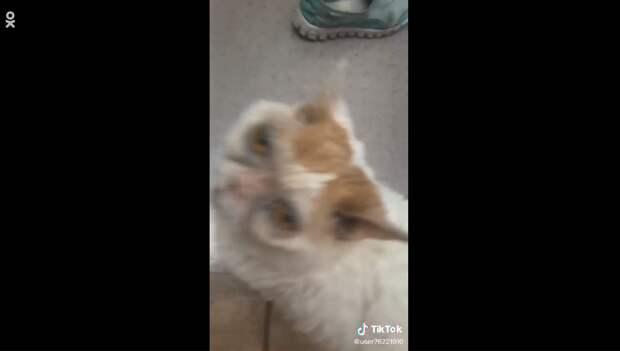 В Сети показали, как выглядит кот с «синяками» под глазами (фото)