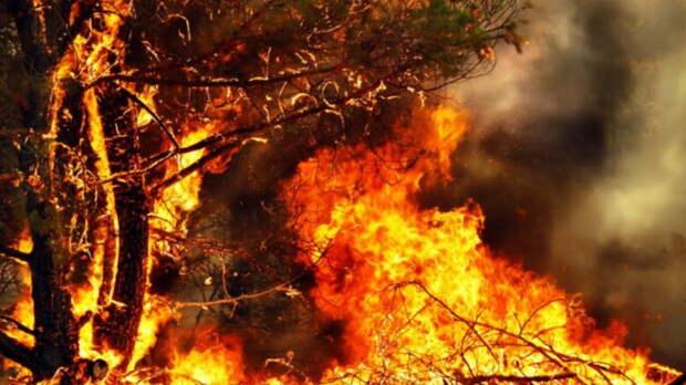 Площадь лесных пожаров в России за несколько дней сократилась почти в три раза