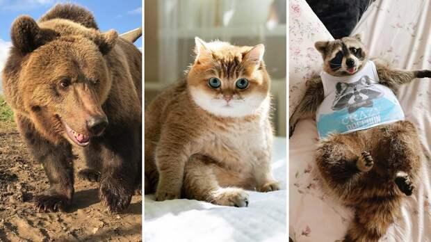 10 животных-блогеров, на которых вам нужно подписаться