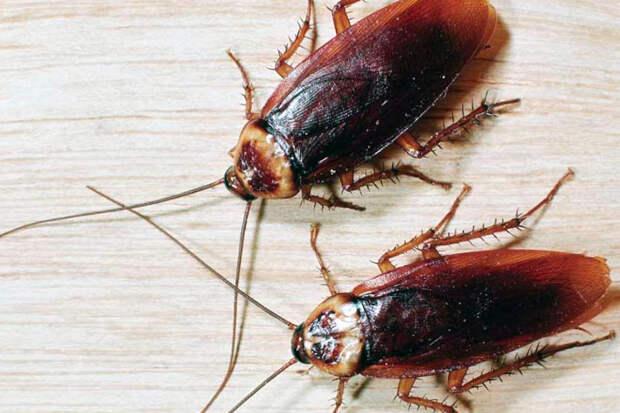 Эффективные методы уничтожения тараканов в офисе