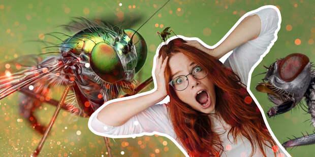 Смерть врагам! Чертова дюжина эффективных штук от комаров с «Алиэкспресса»