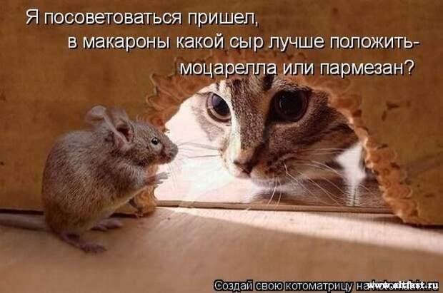1269011009_kotomatrix_40 (700x465, 62Kb)
