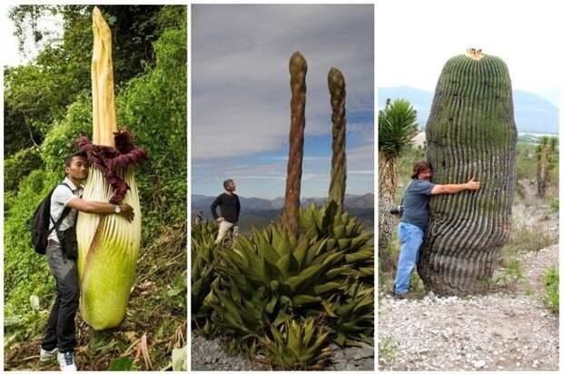 Истинные размеры некоторых растений
