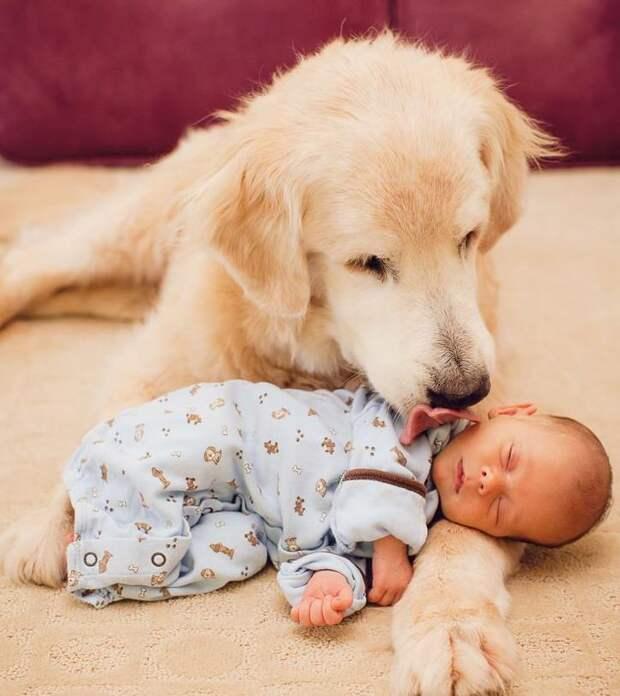15 милых фото, доказывающих, что животные - прекрасные няни для детишек