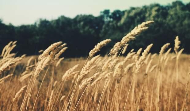 Аграрии на 100% обеспечены минеральными удобрениями