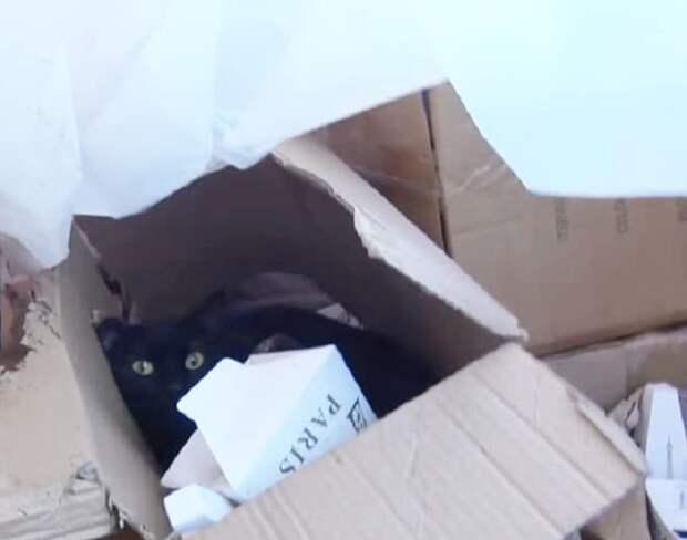 Волонтер попыталась поймать бездомную кошку, но та убежала. В коробке остались котята